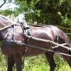 eingefahrene_pferde02